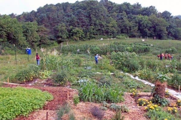 The Hale Community Garden