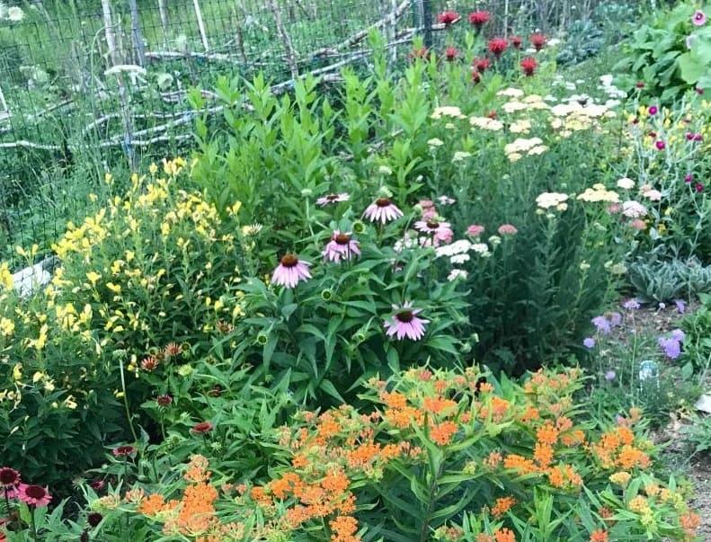 pollinator garden